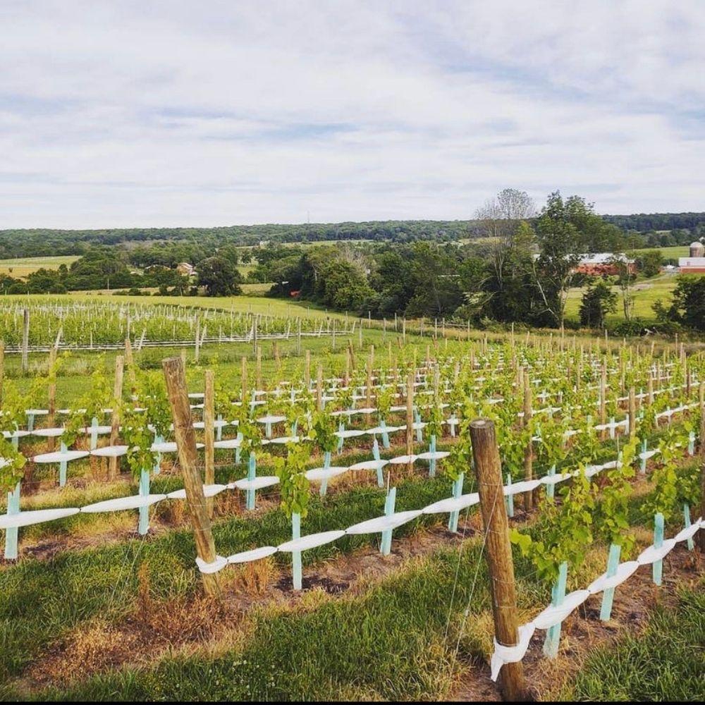 Unionville Vineyards, Ringoes