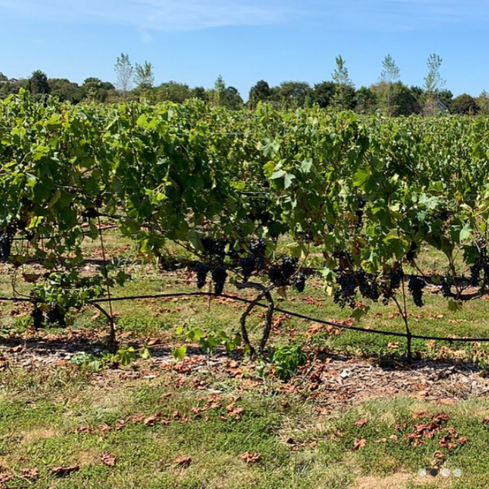 Hopewell Valley Vineyards, Pennington