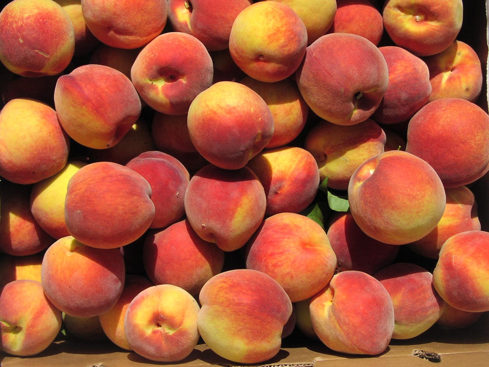Sangria Weekends at Terhune Orchards