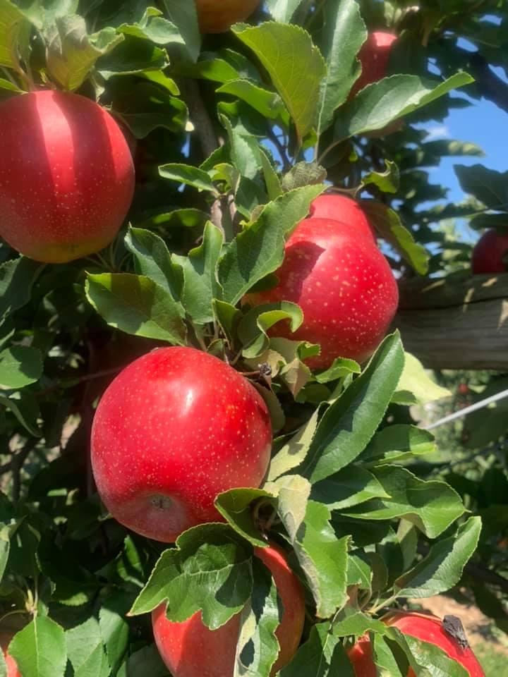 Apple Days Harvest Weekends-Terhune Orchards