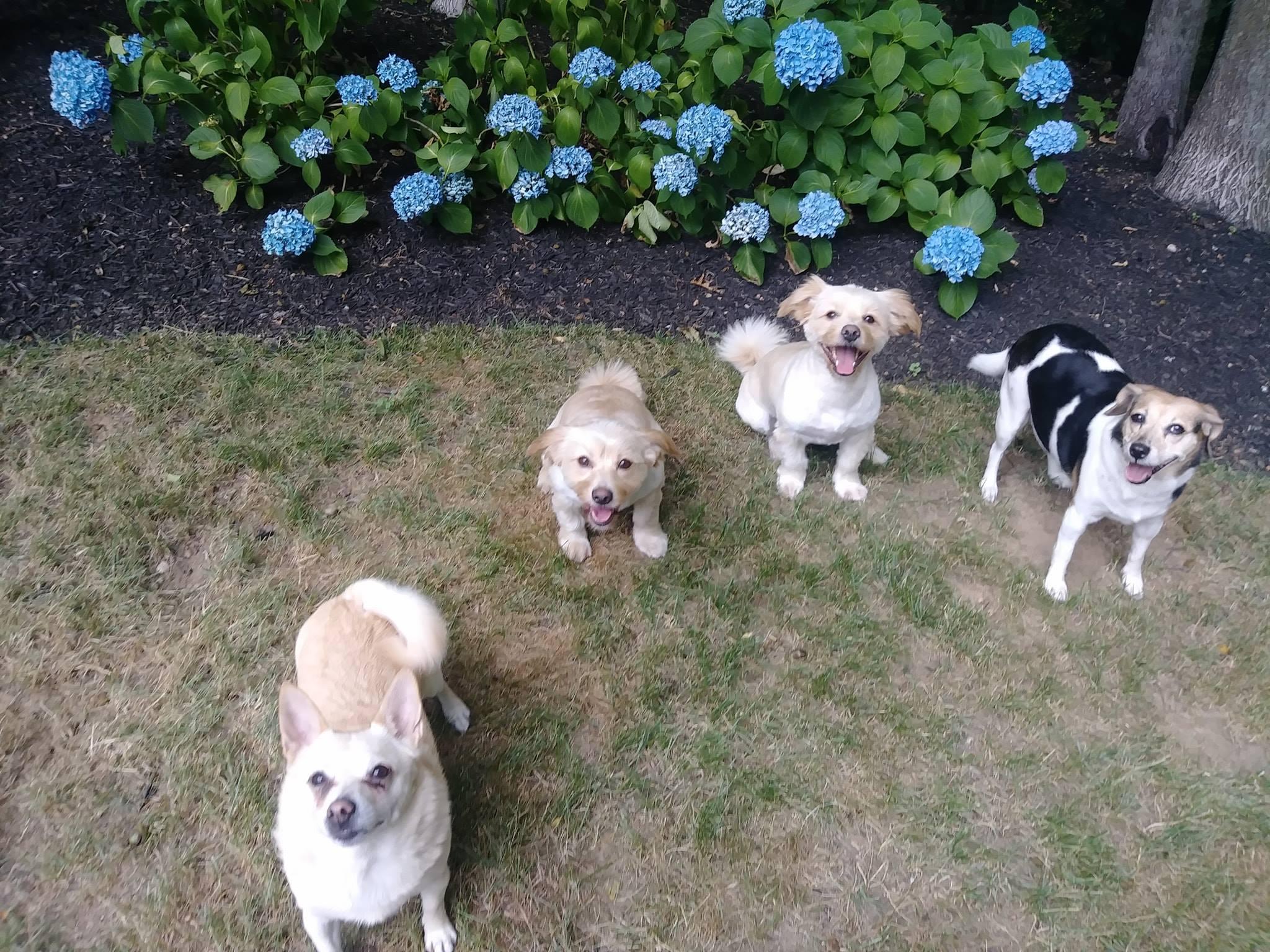 Dog Walking, Pet Sitting, Boarding and More!